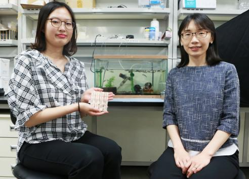 Discovery of bacteria that can biodegrade plastics in the bodies of insects