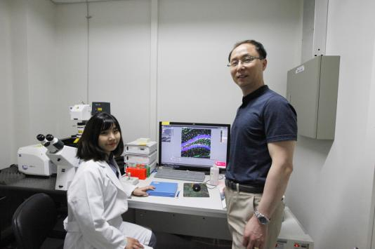 Scientists at DGIST Discovered How Chronic Stress Causes Brain Damage 이미지