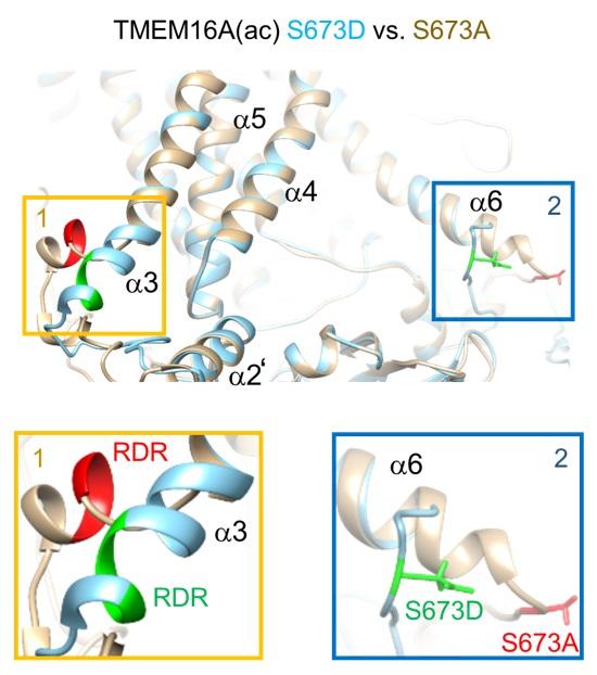 질병 치료에 단초를 제공할 유전자의 활성 원리 규명 이미지3